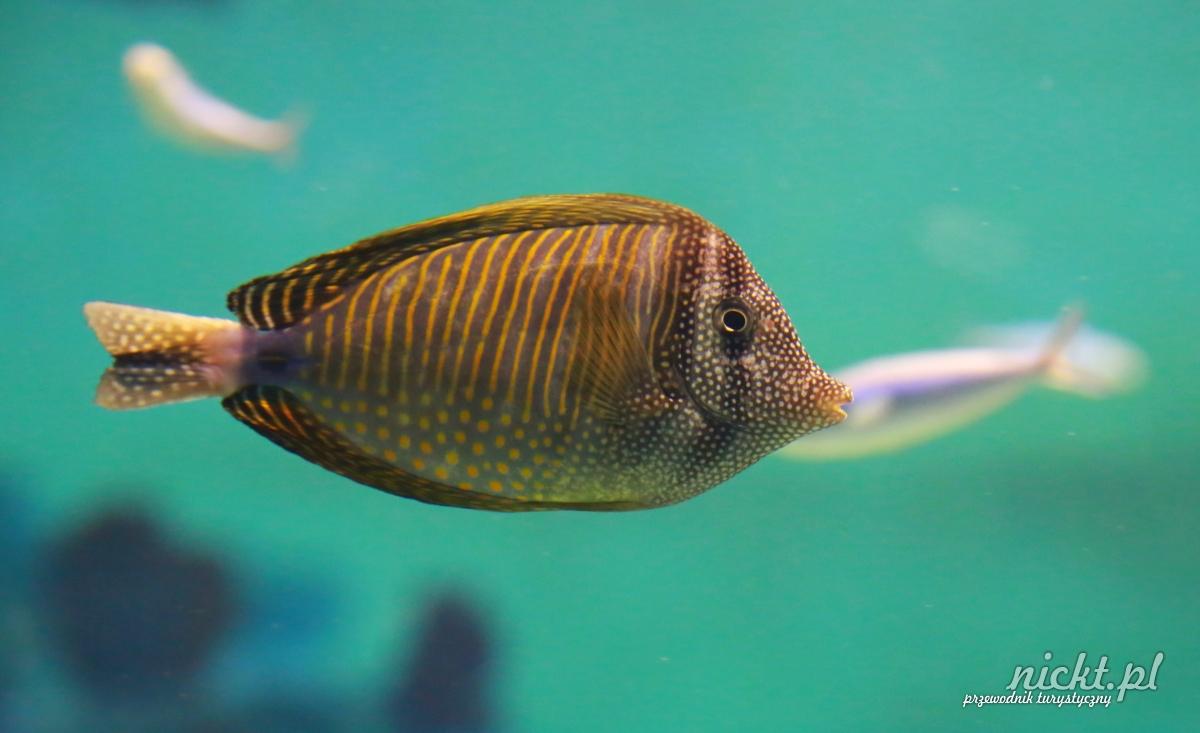 nickt wroclaw oceanarium aafrykarium zoo ogrod zoologiczny 002