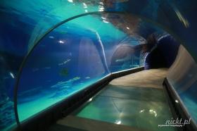 nickt wroclaw oceanarium afrykarium zoo ogrod zoologiczny 007