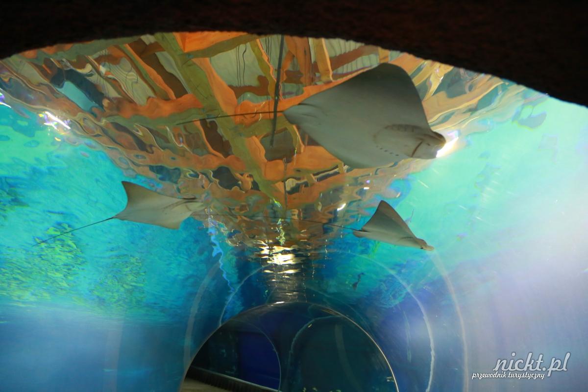 nickt wroclaw oceanarium afrykarium zoo ogrod zoologiczny 012
