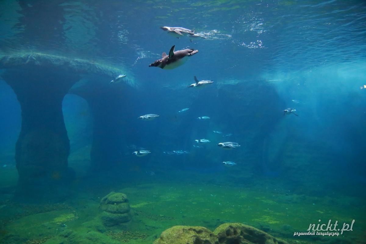 nickt wroclaw oceanarium afrykarium zoo ogrod zoologiczny 016