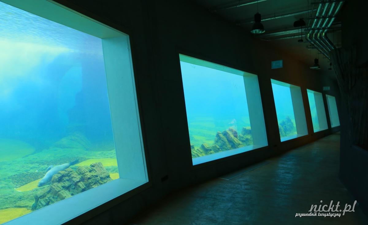 nickt wroclaw oceanarium aafrykarium zoo ogrod zoologiczny 017