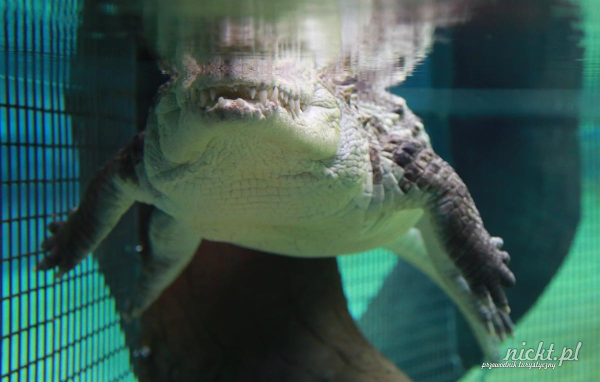 nickt wroclaw oceanarium aafrykarium zoo ogrod zoologiczny 019