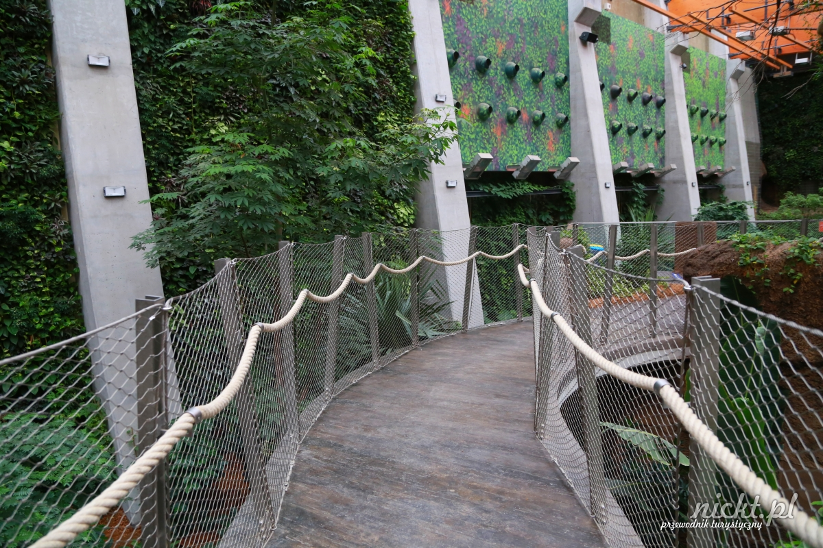 nickt wroclaw oceanarium afrykarium zoo ogrod zoologiczny 023