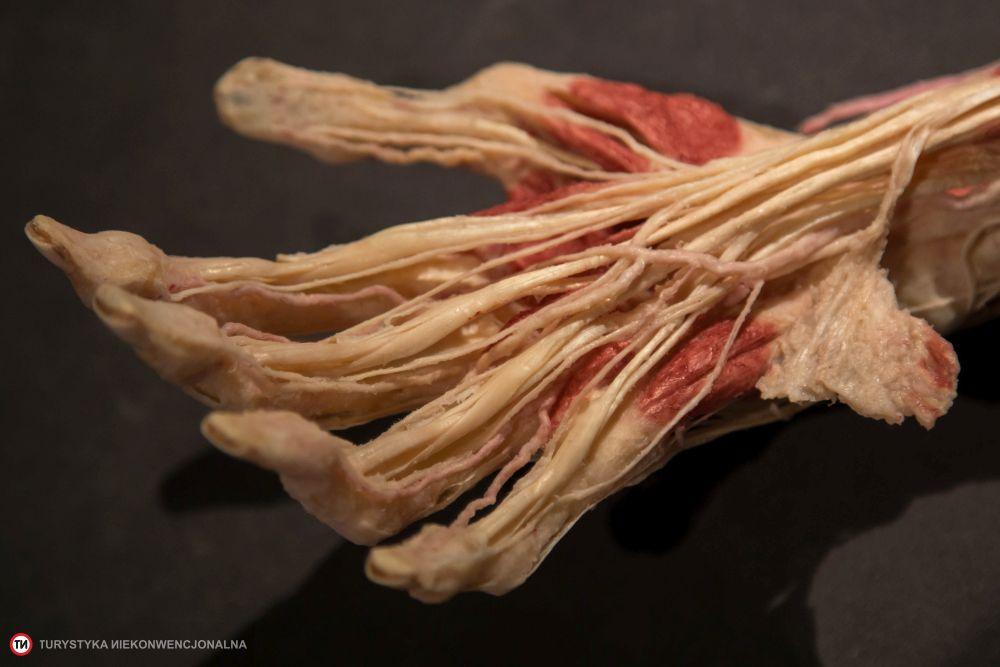 plastynarium guben