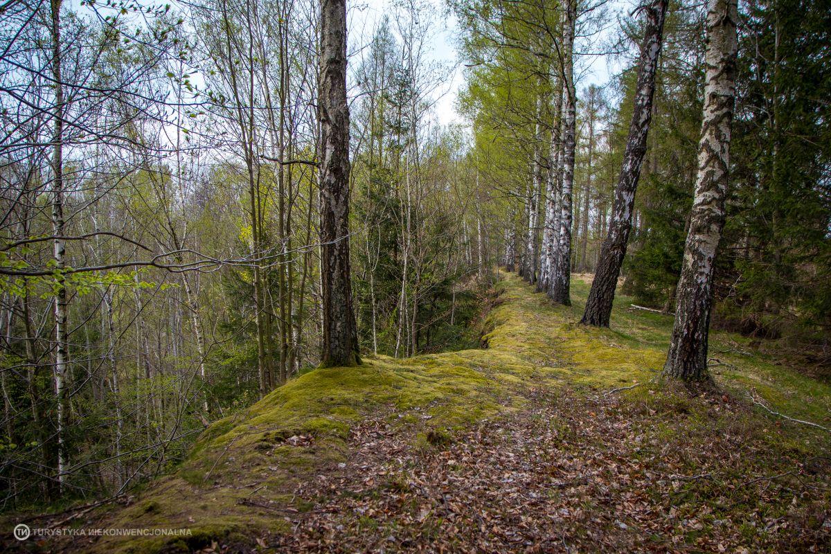 Lubański Wielki Las